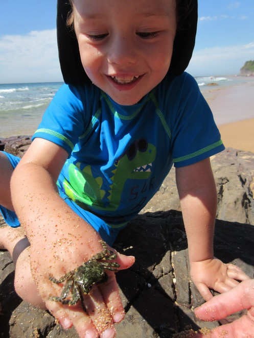 Wombarra Beach, Crabs, Rock Pooling