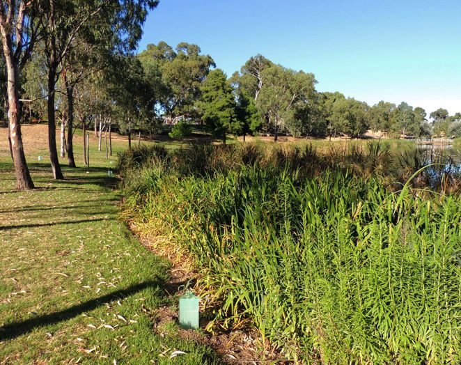 adelaide parklands, guided walks, free guided walks in adelaide parklands, in adelaide, bonython park, community centre, free guided walks, all ages welcome, reed bed, river torrens