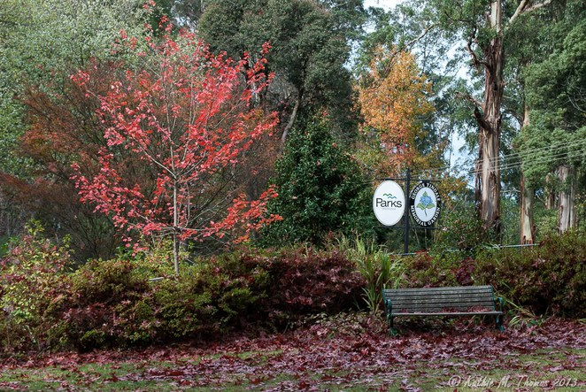 Autumn at George Tindale Gardens