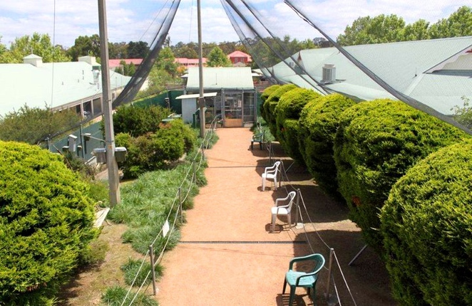 canberra walk in aviary, canberra, birds, aviary, school holidays, ACT, kids, families,