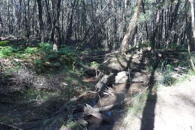Creek on Trachyte Circuit