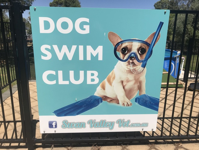 dog swim club, dog rehabilitation, dog pools, dog friendly pool, vets with rehab facilities, dog pools australia, dog pool perth