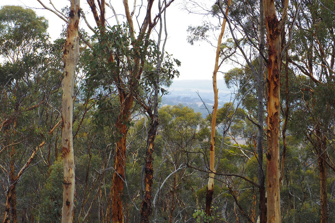 dryandra, woodland, forest, lookout, nature