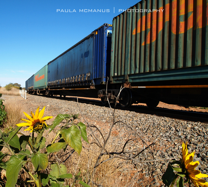 Goods train (©paula mcmanus)