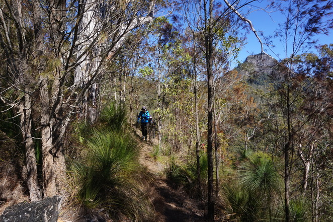 Grass trees on Mt Mathieson Track