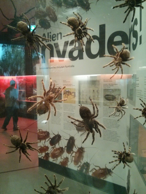 'Bugs Alive!' Exhibitiion at Melbourne Museum