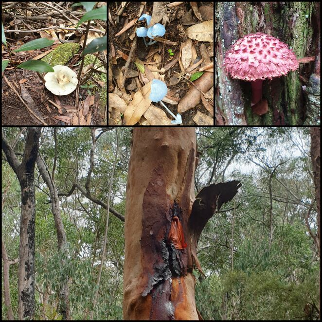 Nature, Australian, bush, walk, funghi, family, free