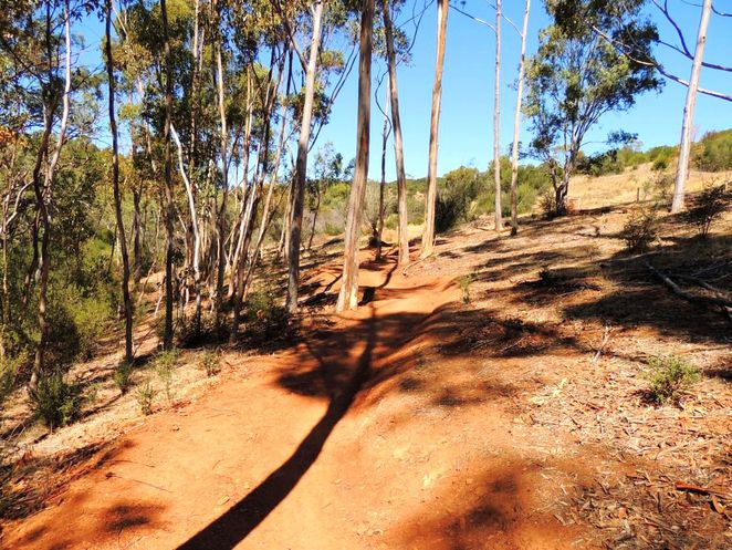 nature play, nature play in the park, fun things to do, free things to do, fun for kids, nature play sa, shepherds hill recreation park, shared use trails, red river gum loop