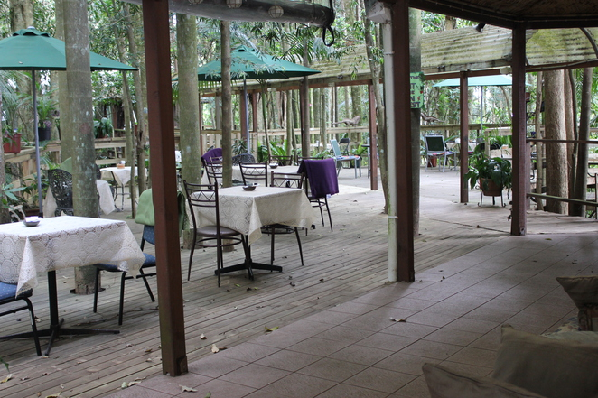 Olley's Honey, Olley's Coffee, Coffee in the rainforest, Mt Glorious, cafe, rainforest, child friendly, high tea,