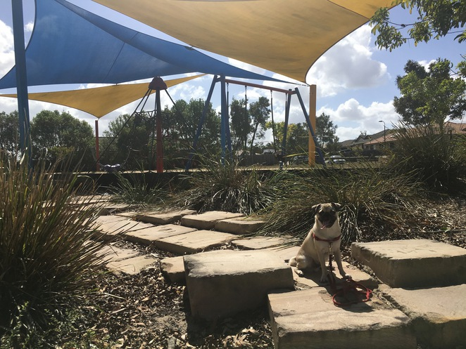 park, dog park, dog, dog friendly, ainslie park, logan, logan city, marsden, brisbane, southside, free, children, fun, playground