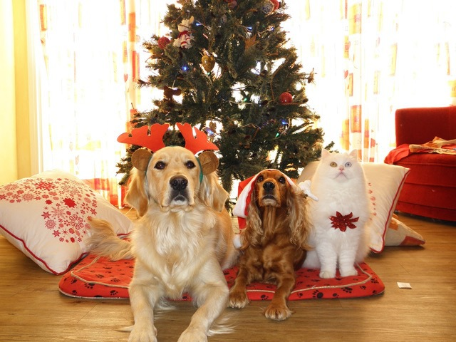 Santa Paws, Sunshine Coast, photo of your pet with Santa Claus, Sunshine Coast Animal Refuge, cats, dogs, adopt a new pet, fun for the family, food, cold drinks, raffles, Tanawha