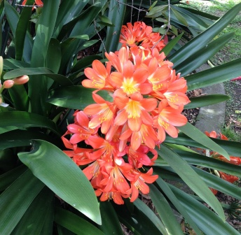 school holidays digital scavenger hunt orange flower clivia