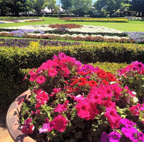 Toowoomba Carnival of Flowers, street parade, beautiful flowers, floral displays, divine food, wine, art, interactive workshops, side-show alley, book your tickets, eat, caught, play and stayo