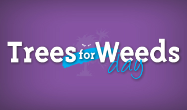 Trees for Weeds Day - Mainland event