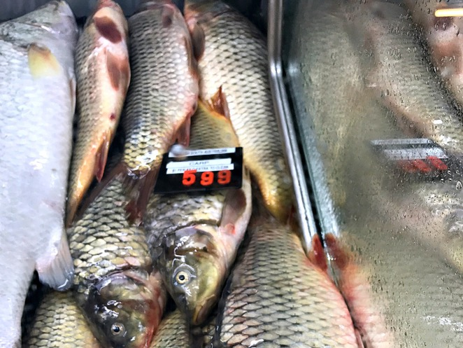 Cappo Bros, Central Market, Adelaide, Fish, Coorong Mullet,Carp