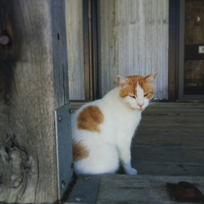 Cats, French Island, general store, hiking, bike riding, explore, outdoors, adventure, national park, westernport bay