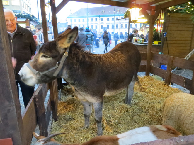 donkey, nativity, christmas, prague