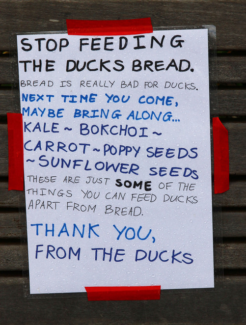 Don't feed the ducks sign.
