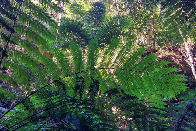 Ferns growing along the trail