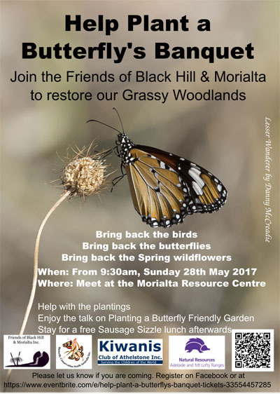 help plant a butterfly's banquet