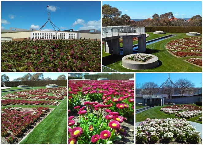 house of representatives formal garden, parliament house, canberra, ACT, floral events, spring, what to see after floriade, flowers, gardens, free entry, parlaiment house gardens,