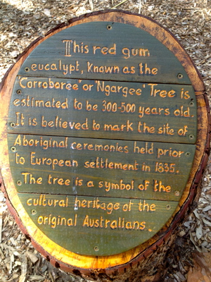 The Story of the Corroboree Tree, St Kilda (c) JP Mundy