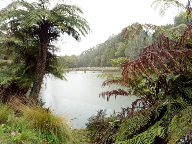 Lake Emerald, dandenong rangers, lake, daytrip, family day out, puffing billy