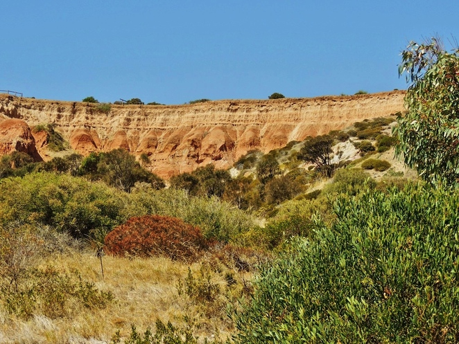 nature play, nature play sa, hallett cove conservation park, activities for kids, free things to do, hallett cove, walking trails, free event, native wildlife, the amphitheatre