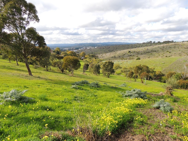 parks, recreation parks, walking, south of adelaide, in adelaide, bike paths, walking trails, dog friendly, parks and reserves, morphett road