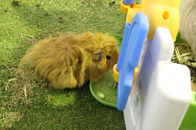party petz mobile petting zoo