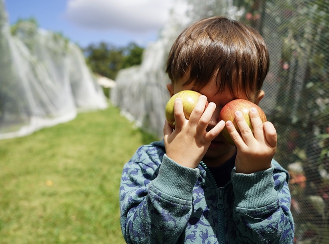 Pick your own, sydneyeats, Apple picking, Hawkesbury harvest, sydneyfoodie, fun for kids, Sydney day trip, Bilpin, Shield Orchard, Bill and Julie Shields