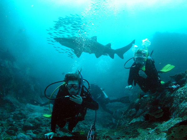 sharks, scuba diving, jetty dive, coffs harbour, training, marine park