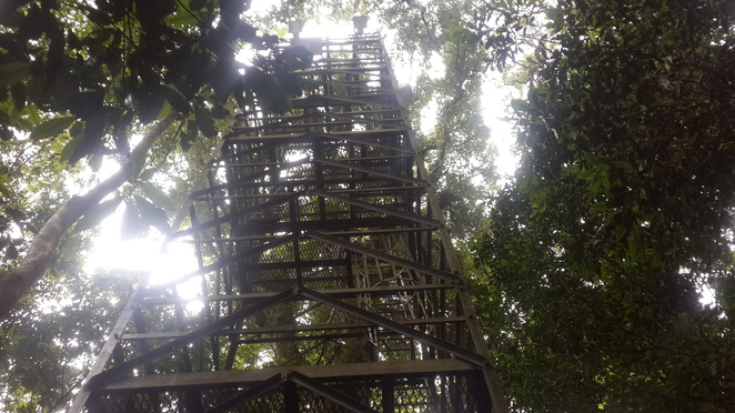 tower, scaffolding, mick O'reilly, O'reilly's Lamington National park