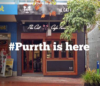 cat, cafe, perth, purrth, wa, kitty, subiaco, cup