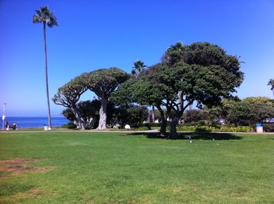 Ellen Scripps park at La Jolla Cove