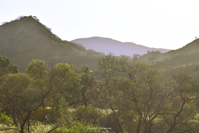 Flinders Bush Retreats, Hawker, Flinders Ranges, Glamping, Willow Waters Gorge
