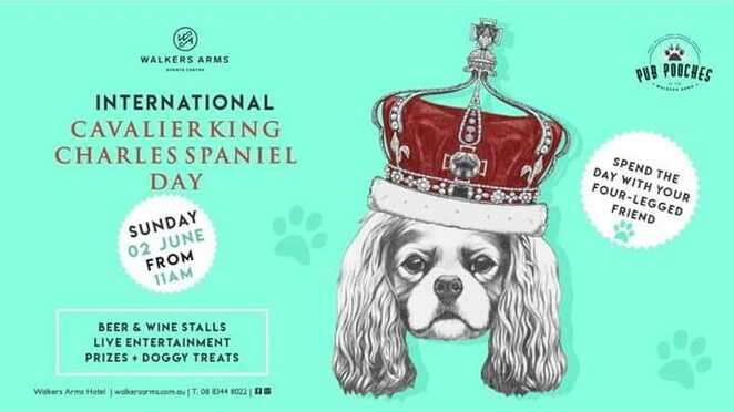 ickcs day 2019 melbourne meet up, international cavalier king charles spaniel day melbourne meet up 2019, community event, fun things to do, dog lovers, free event, elsternwick park, pet owners, walk with your pet, off lead romp time, heaps of fun, brighton, cavalier and friends welcome