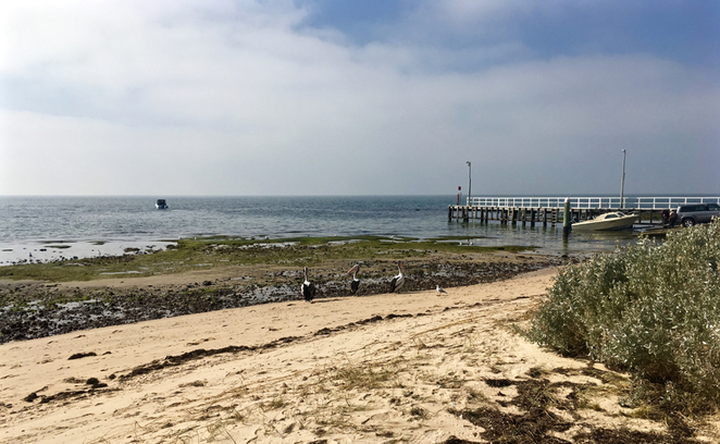 indented head, Wrathall Reserve, picnic spot, bellarine, playground, parks on the bellarine peninsula, BBQ, barbecue, public BBQ, boat ramp, jetty, tennis court, memorial, places to visit in indented head, pelicans, birds, beach,
