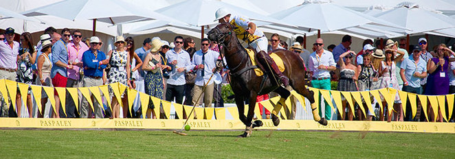 polo, Polo by The Sea, Polo Gold Coast, What to do Gold Coast, What to see Gold Coast, events Gold Coast, different thing to do Gold Coast, Polo Enterprises Australia