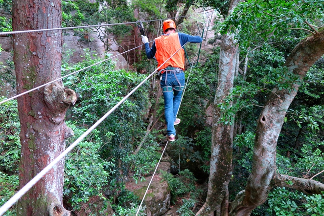 Trees adventure park, treetop and ropes adventure Nowra NSW