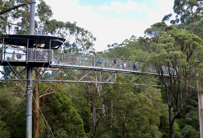 Victoria Melbourne Otways Weeaproniah Treetop Treetops Adventure Rainforest Zipline Adventure Outdoors Travel Get Out Of Town Escape The City