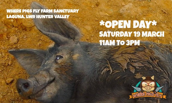 Where Pigs Fly Open Day