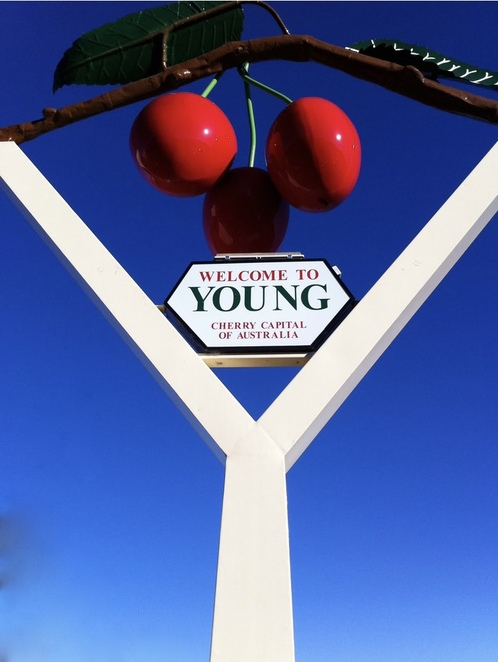 Young cherry picking, cherry season NSW, cherry picking near Canberra, cherry orchards Young, National Cherry Festival