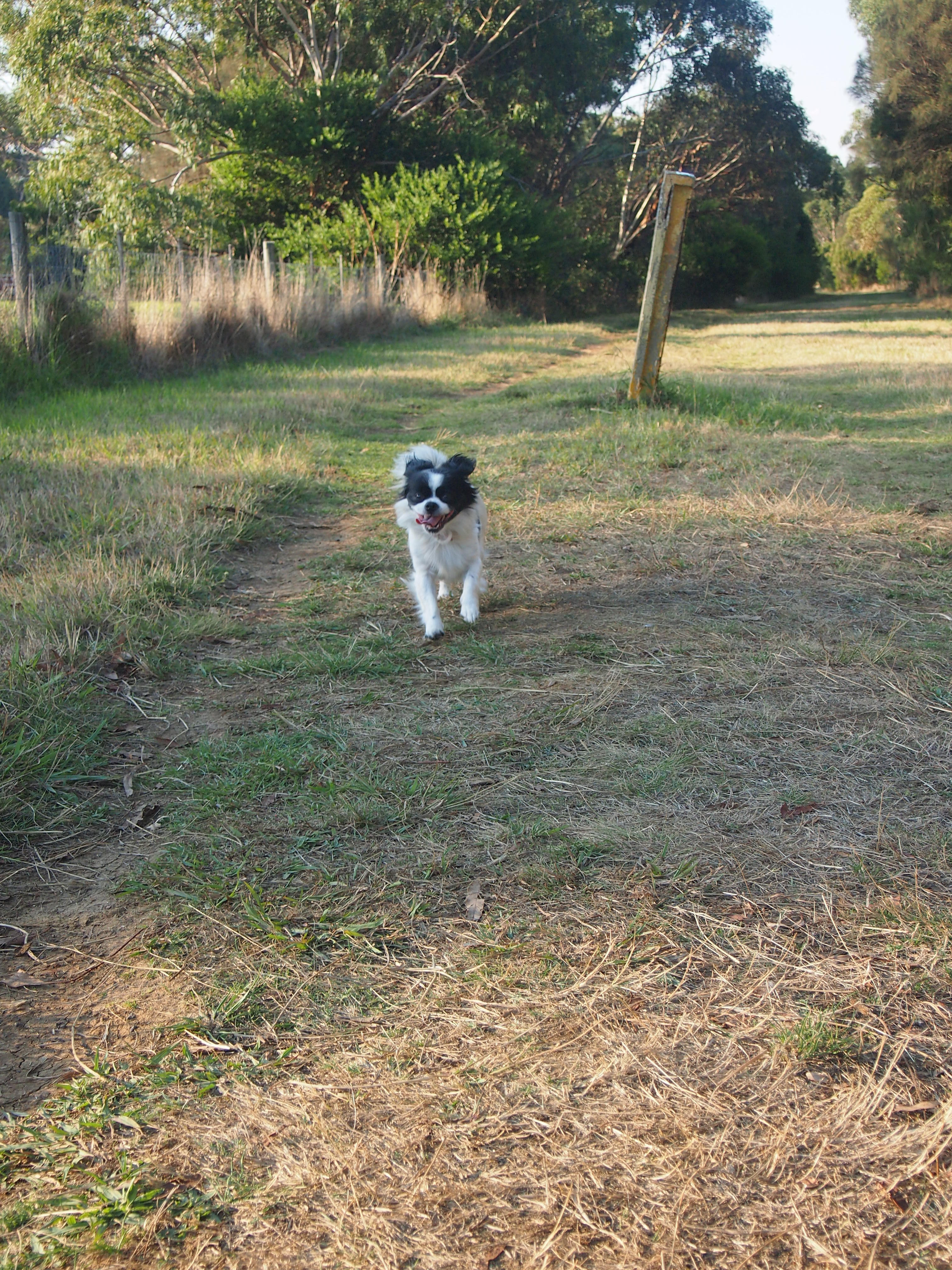 The Briars Community Forest Leash Free Park Melbourne