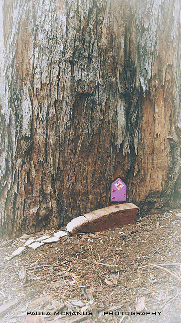 Fairy house, Deanery Reserve Bridgewater
