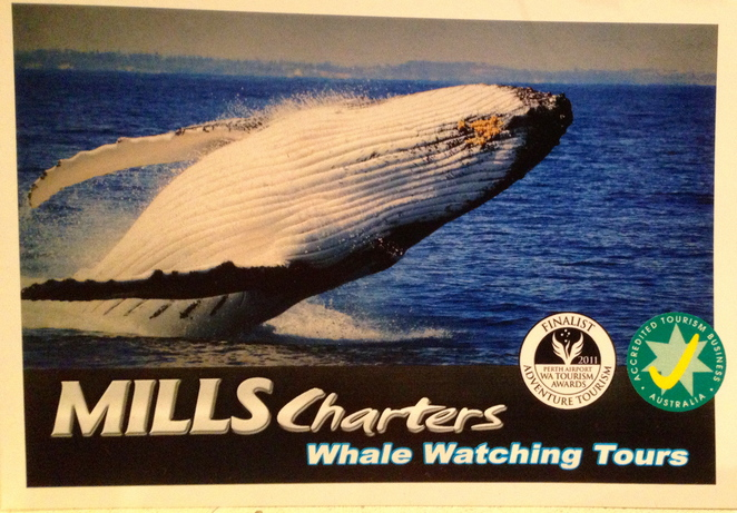 Humpback Whale, Mills Charters, Whale Watching