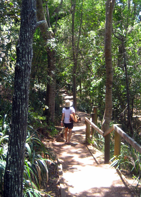 The walk above the mangroves at Wellington Point