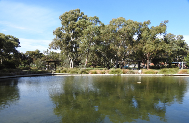South Australian wildlife, South Australian tourism, Wildlife photography Wildlife stories, Regency Park Golf Club, Regency Park