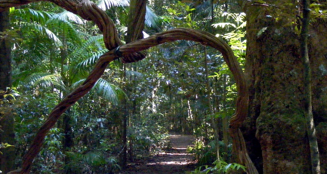 Enjoy the beautiful rainforest of the Sunshine Coast Hinterland in summer or winter