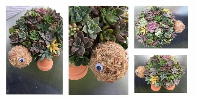 Workshops, Succulent Creations by Amy, decor ornaments, home, Christmas gifts, Sweethearts Cafe in Eudlo, afternoon tea, Succulent Bird House, Succulent Cocodama, Succulent Heart Wreath Workshop, Succulent Bird Cage, Succulent Bee Hotel, Succulent Turtle Workshop, care instructions, invite a friend, creative and casual, gift idea
